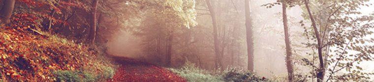 cropped-autumn.jpg