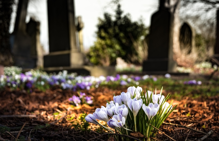 graveyard-church-crocus-cemetery-161280.jpg